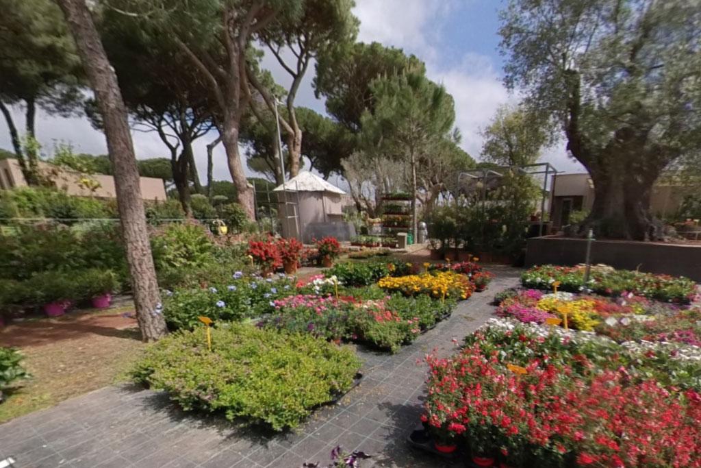 fiori e piante vivaio principina