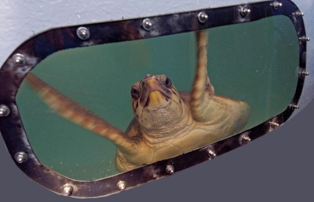 associazione tartamare marina di grosseto